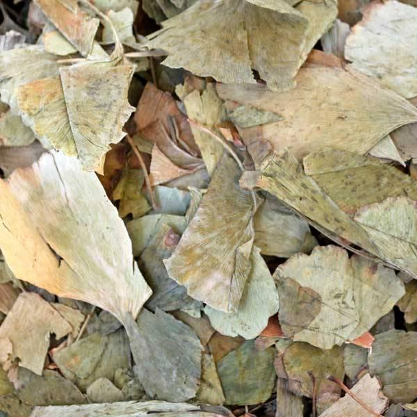 Ginkgoblätter getrocknet