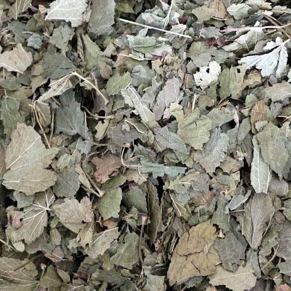 Johannisbeeerblätter