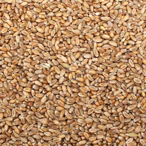 Weizen ohne Verpackung