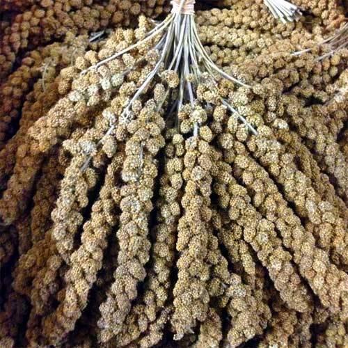 Kolbenhirse gelb - Deutscher Anbau lose