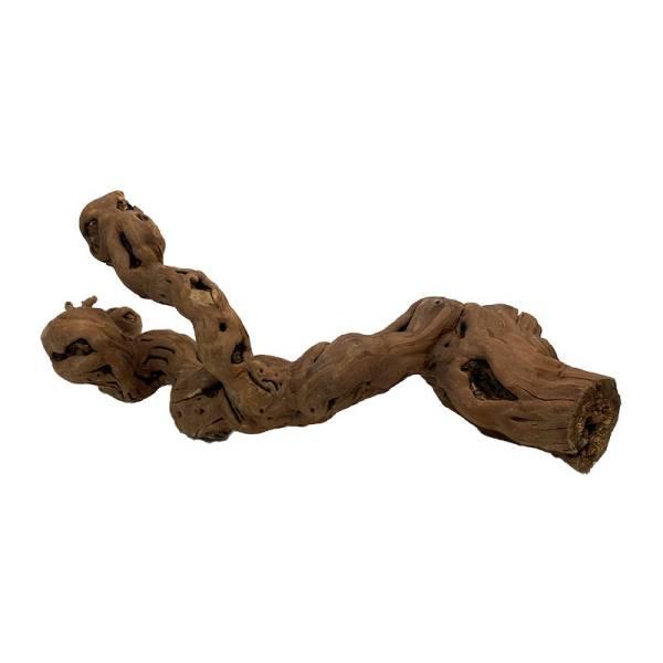 Weinrebe L 40-50cm